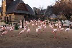 Flamingos <3
